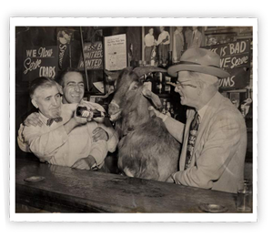 goat-drinking-beer